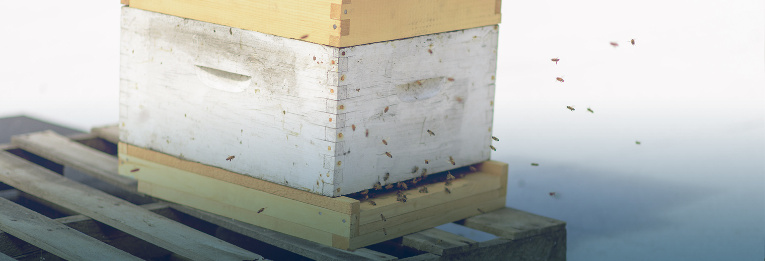 Bees in pointe claire ville de pointe claire for Pointe claire swimming pool schedule